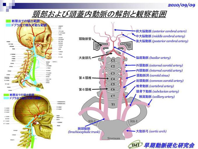 頸動脈の観察と画像記録>2D断層...